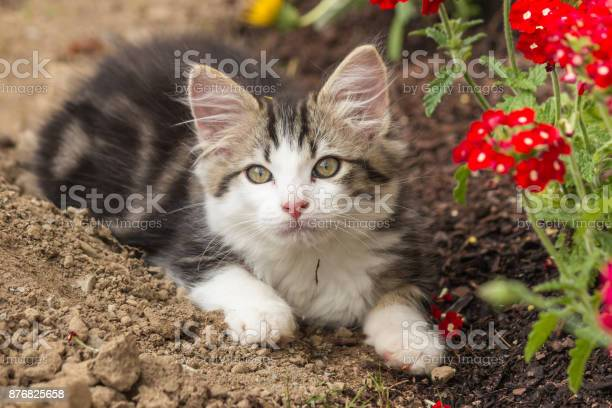 Playful tabby kitten resting on soil in garden picture id876825658?b=1&k=6&m=876825658&s=612x612&h=bz2mm119rozqfi7jzicvhkqdwncxu5iaykt4b1iilpa=