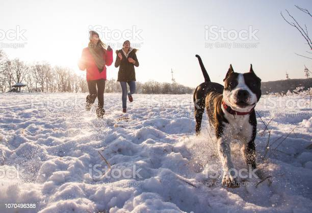 Playful women having fun while running with stafford dog on snow in picture id1070496388?b=1&k=6&m=1070496388&s=612x612&h=espd9wpchok1mc4wpelmi2k uevqm5sndedtdeczlge=