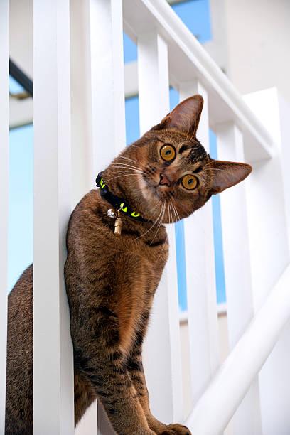 Playful young cat picture id174992642?b=1&k=6&m=174992642&s=612x612&w=0&h=fho7ez1bwydes1zhj9fgzmdt uewj 1ctj9hdkeaj3g=