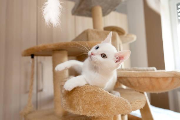 Arranhador Para Gato Banco de Imagens e Fotos de Stock - iStock