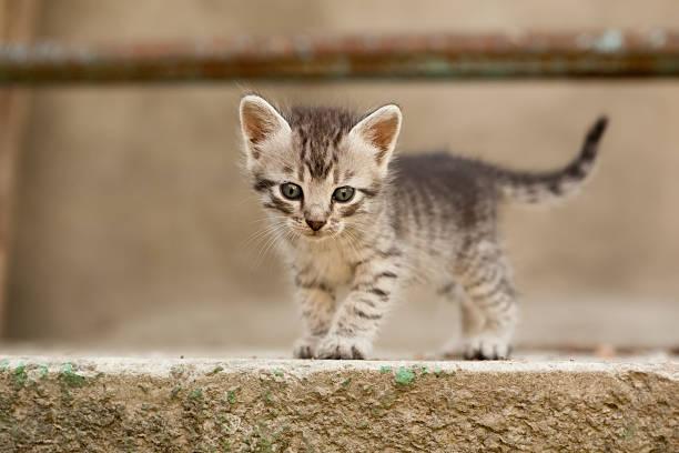 Playfull kitten picture id137199440?b=1&k=6&m=137199440&s=612x612&w=0&h=sknzryw2xh9fneyb3w93xnykhzp9u5k87ba imimzsa=