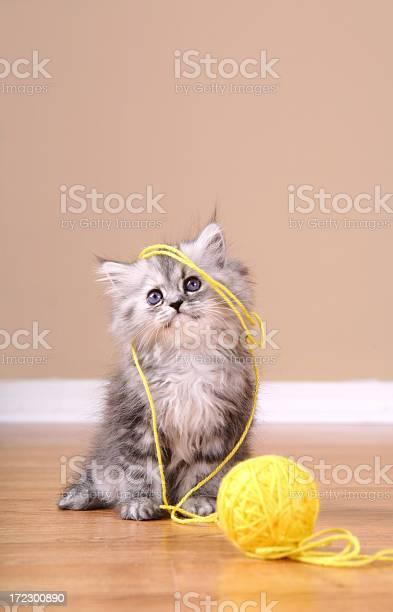 Playfull kitten picture id172300890?b=1&k=6&m=172300890&s=612x612&h=pv6tzdv8v nbjs8inlj6h1 jv 4ss0wg5av 5ytb7nu=