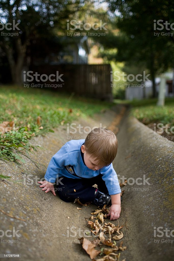 Playin' with the Leaves royalty-free stock photo