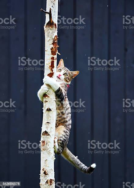 Playing and climbing the tree picture id543656578?b=1&k=6&m=543656578&s=612x612&h=cc2zhowo7zu1pwwq3pltbaxlj3gwiuit9 tgons2n y=