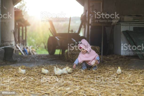 Playing and touching little chicken birds picture id666005440?b=1&k=6&m=666005440&s=612x612&h=i2pbqxs oixgl2nqjyhcllrmcguoqd1dubjjvsmpk1c=