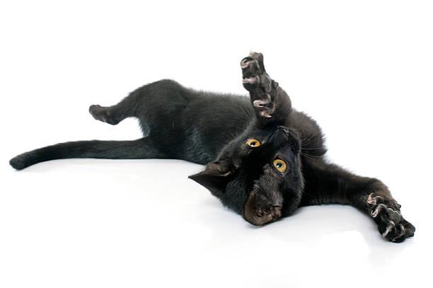 Playing black kitten picture id497857432?b=1&k=6&m=497857432&s=612x612&w=0&h=rkdvhikfxu24kfycpcwbyy2 ky6a4mrqezvq9c ugsm=