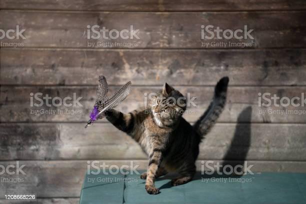 Playing cat picture id1208668226?b=1&k=6&m=1208668226&s=612x612&h=llxd8421utfc6gbll4dgl6h3q 9exvldp8zatigtzxq=