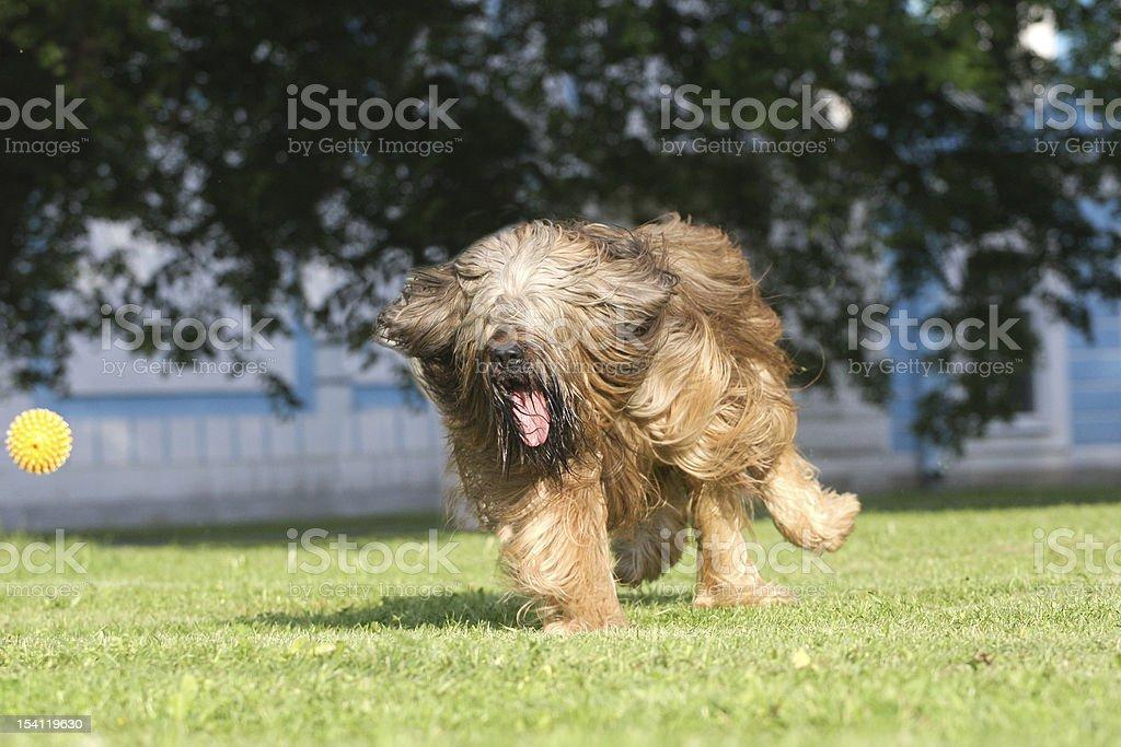 Playing dog royalty-free stock photo
