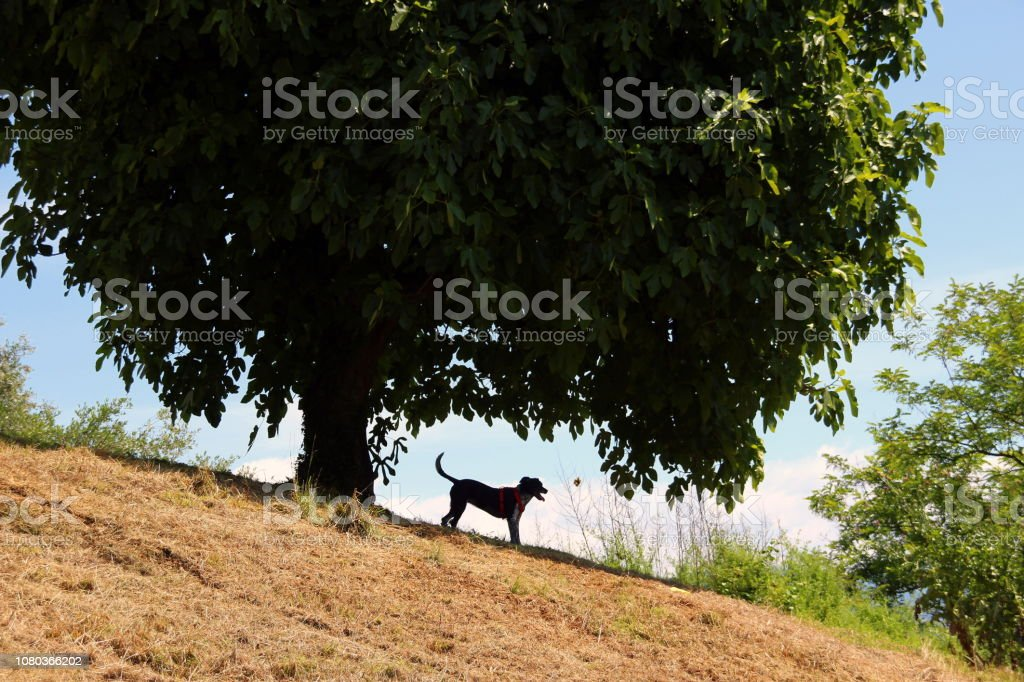 Playing dog under the tree\'s shadow