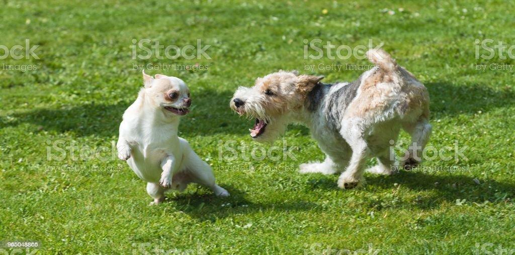 Playing dogs zbiór zdjęć royalty-free