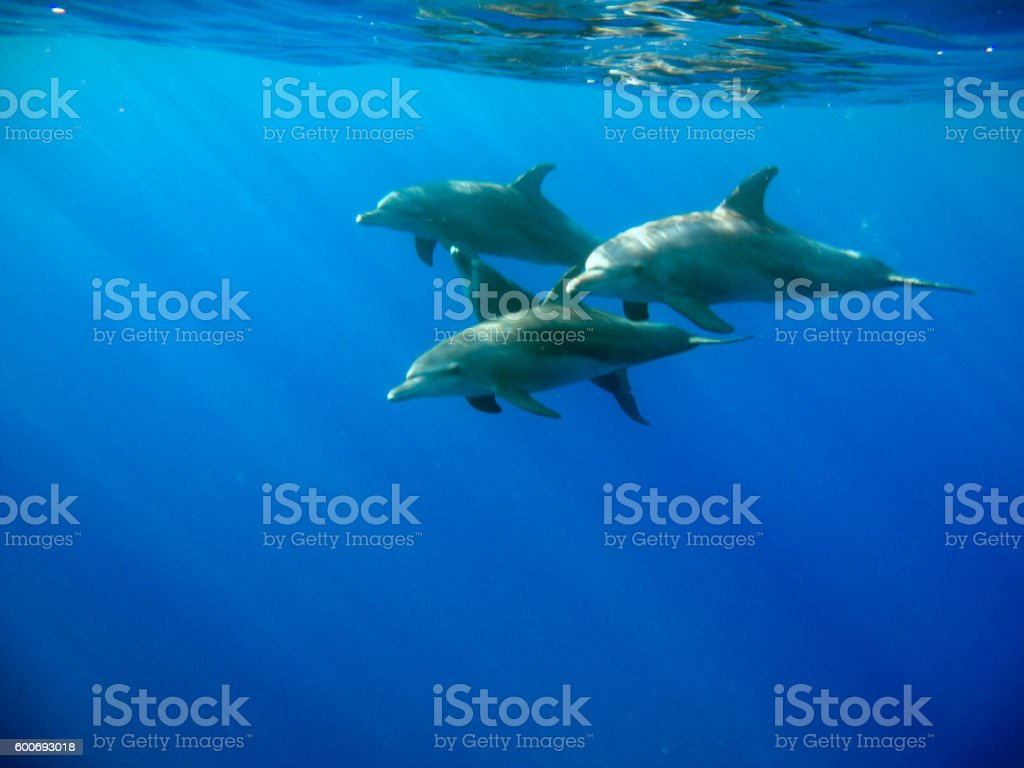 Playing dolphins stock photo