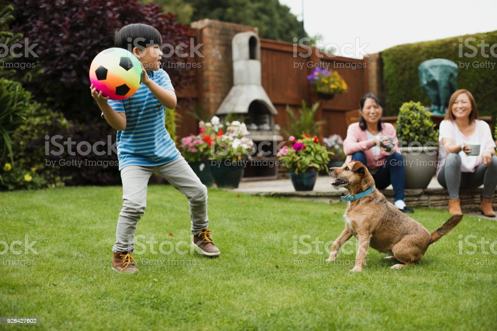 Playing Fetch in the Garden royalty-free stock photo