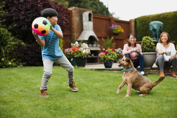 playing fetch in the garden - backyard stock pictures, royalty-free photos & images