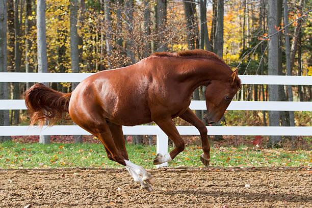 Playing horse picture id454962635?b=1&k=6&m=454962635&s=612x612&w=0&h=snk8bacj 6pn9nxh1hnqu8wal  h i3pcwf1mw9tkx0=