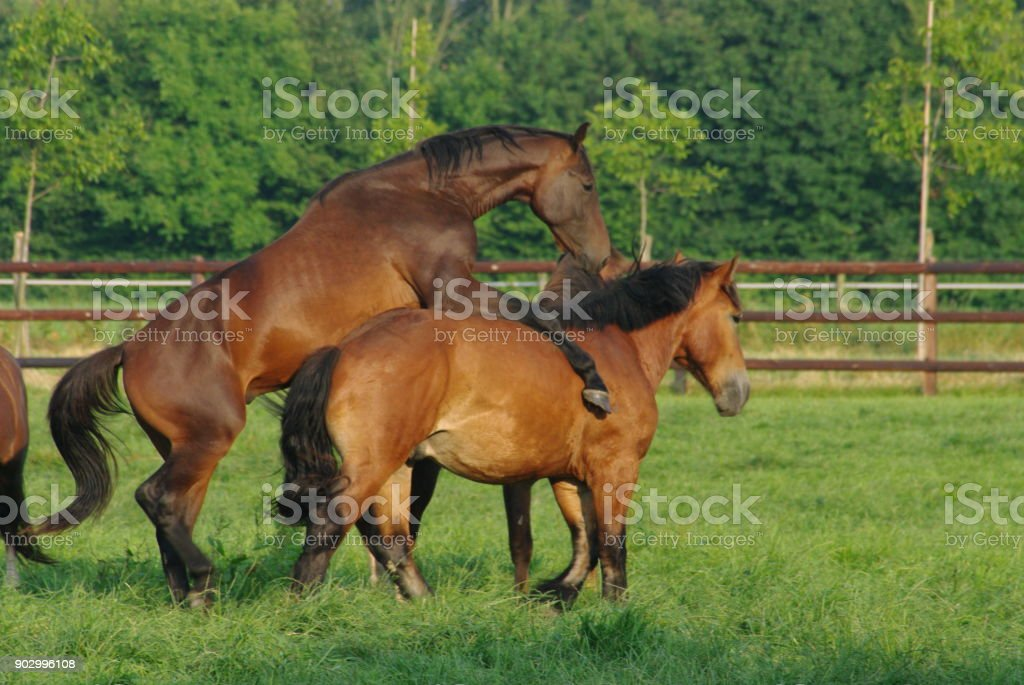 playing horses picture id