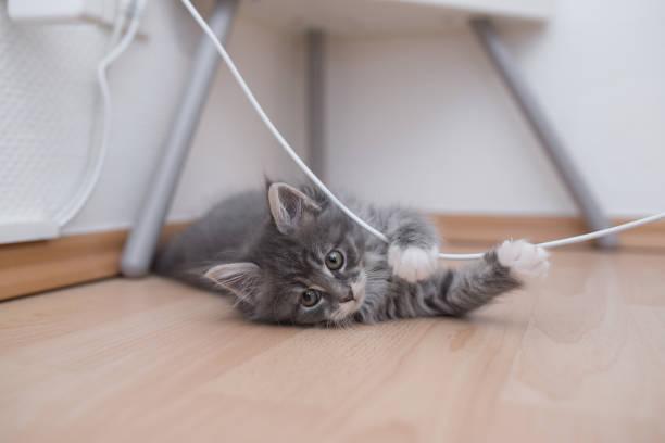 Playing kitten picture id1135725000?b=1&k=6&m=1135725000&s=612x612&w=0&h=e6anypwer7drig8untoyr9tpcxy4dwjd5obrsewyrk0=