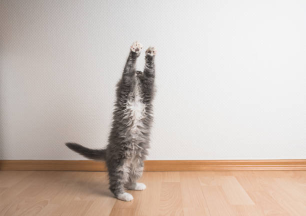Playing kitten picture id1135779770?b=1&k=6&m=1135779770&s=612x612&w=0&h=zuit05shss3k5axtvicxaiirvipxczi 0u21pxit bi=