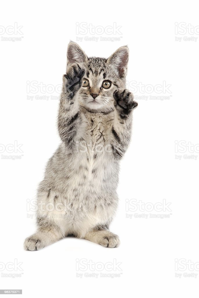 playing kitten royalty-free stock photo