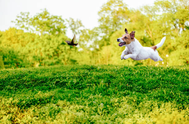 playing off leash dog chasing bird in park - dog jumping stock photos and pictures
