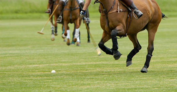 playing polo - kellyjhall stock pictures, royalty-free photos & images
