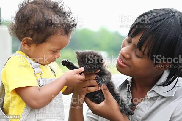 Playing with a kitten picture id166053544?b=1&k=6&m=166053544&s=612x612&h=c2x5yti3llz8xqsqhdblg1oohbuxtbs9htlfkydcdam=
