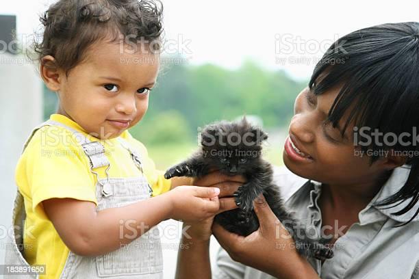 Playing with a kitten picture id183891650?b=1&k=6&m=183891650&s=612x612&h=mpn mfsvkdbw9edcusxgbjxao1pwwwari7ct8hqj610=