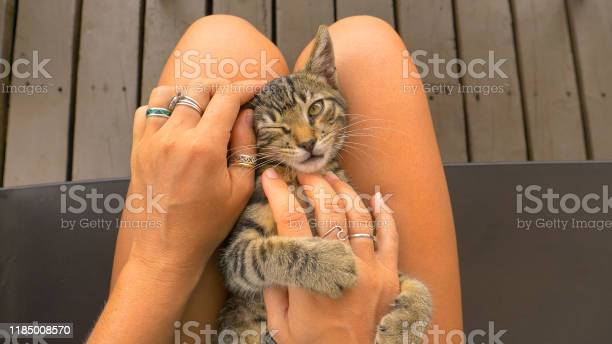 Playing with a small kitten while it sits on your lap stroking its picture id1185008570?b=1&k=6&m=1185008570&s=612x612&h=7zerxedwv5227lfhmhuvqnzsd42mp4jp09yrnkfx96u=