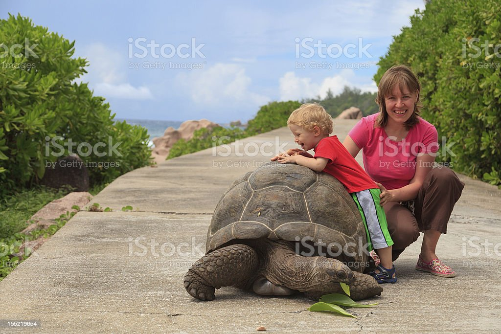 Playing with giant turtle stock photo