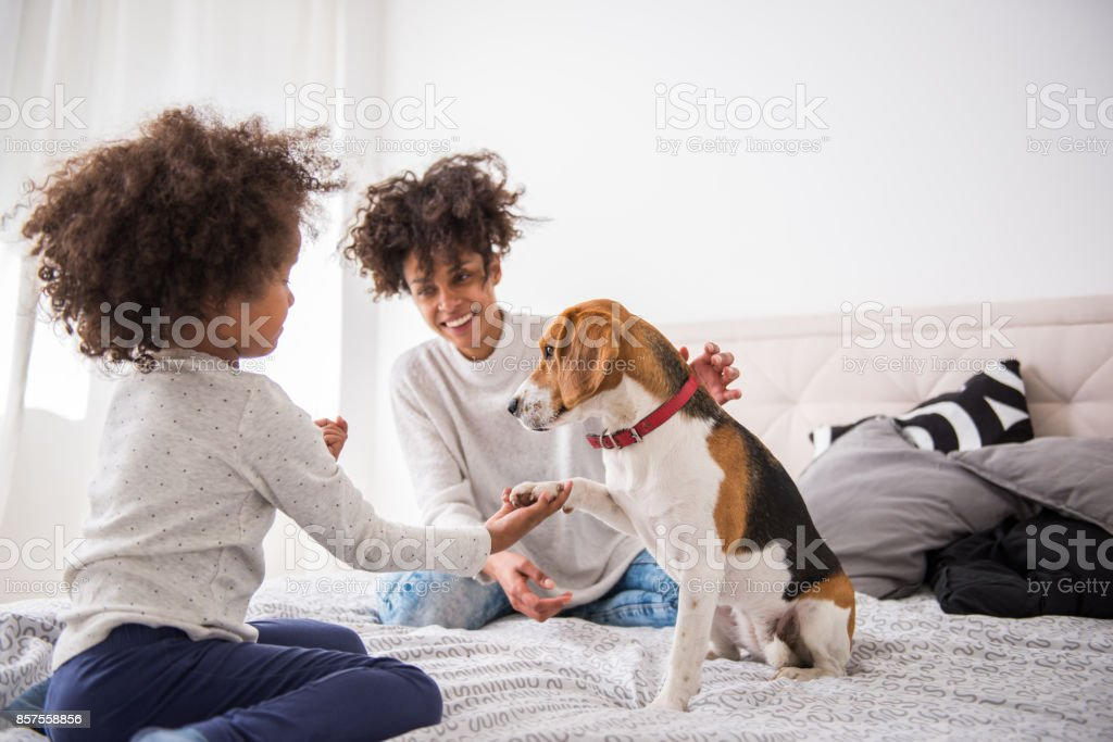 Playing with pet stock photo