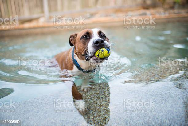 Playing with the ball in the pool picture id494006952?b=1&k=6&m=494006952&s=612x612&h=kyna2rq3qvv6z coldsaov3ziccz9zrw22ofd8gmsoy=