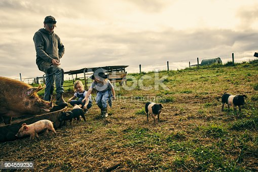 Full length shot of a male farmer and his two kids working on their pig farm