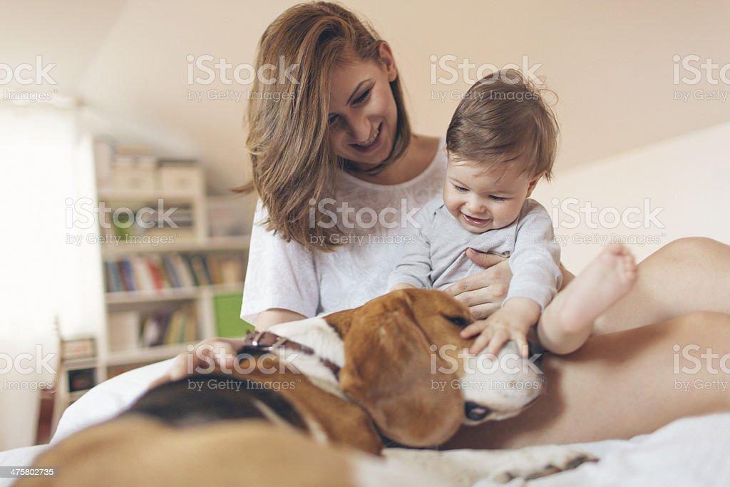 Spielen mit Hund – Foto