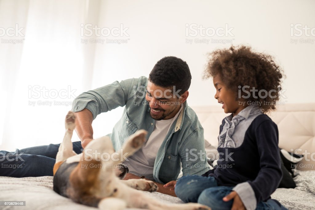 Playtime with pet stock photo