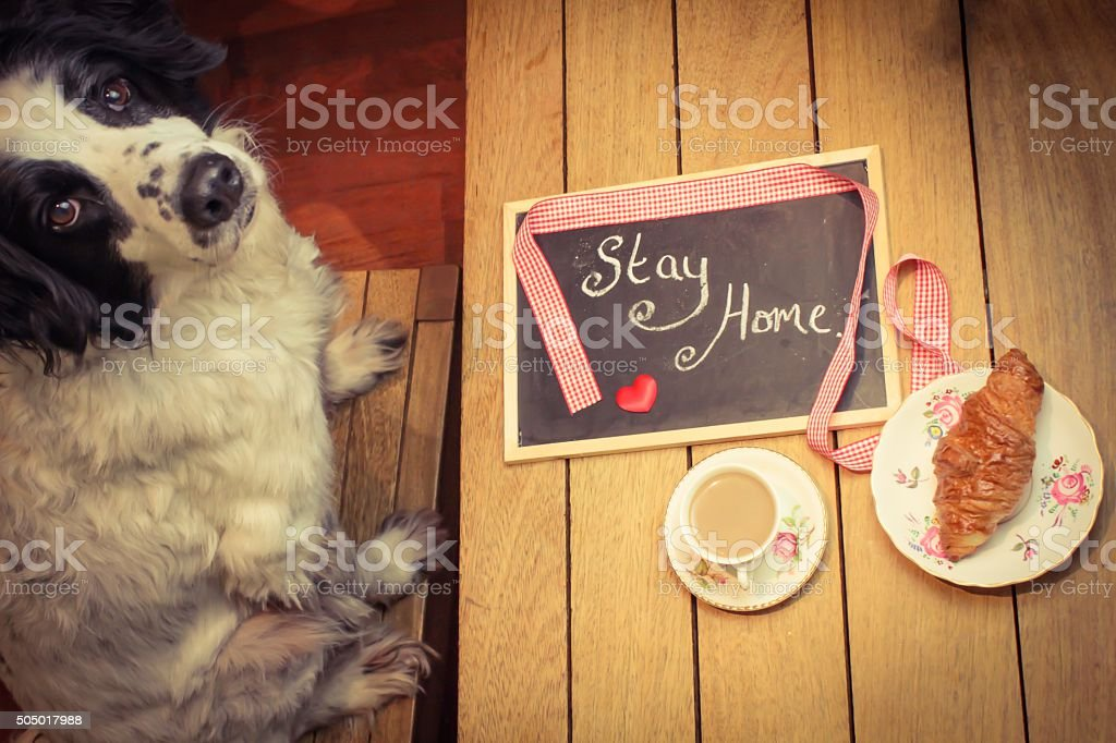 Plead from a pet stock photo