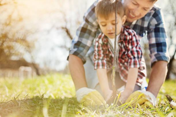 pleasant father and his son planting a tree - piantare foto e immagini stock