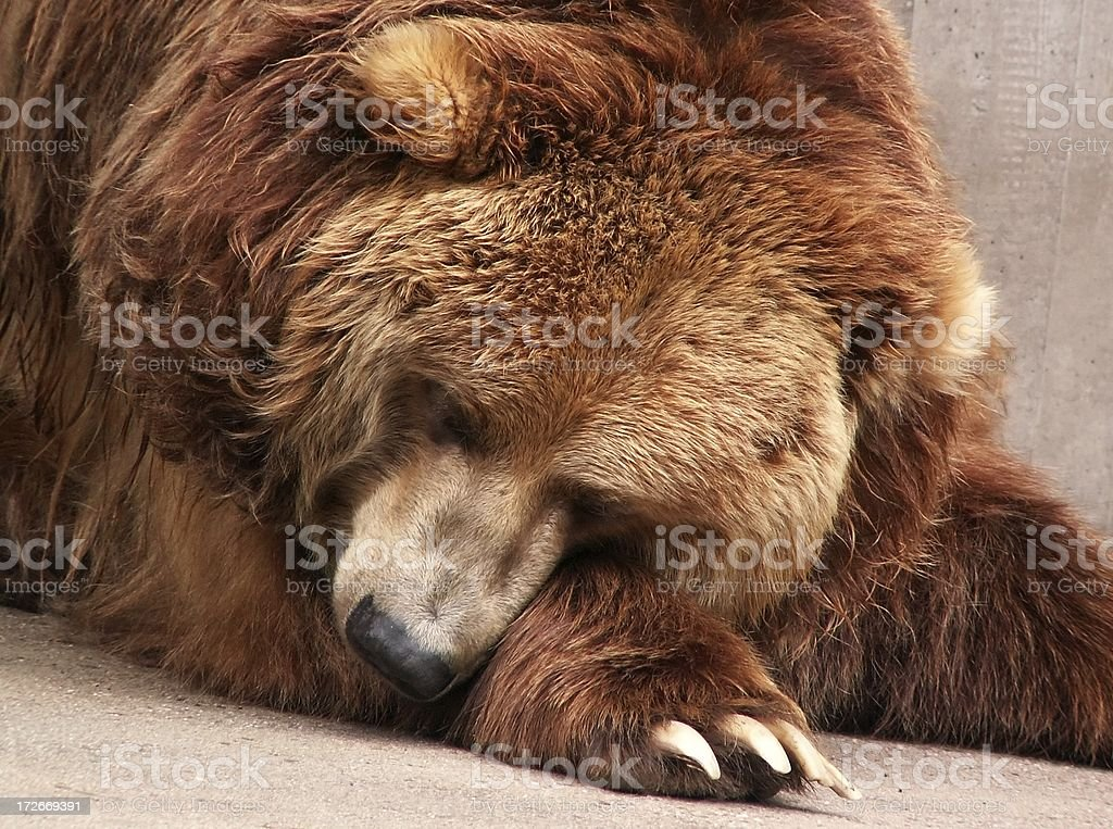 Please don´t bother me, I am sleeping! stock photo