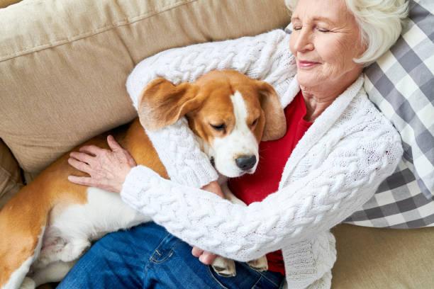 zufrieden besitzer schlafen mit hund - nickerchen stock-fotos und bilder
