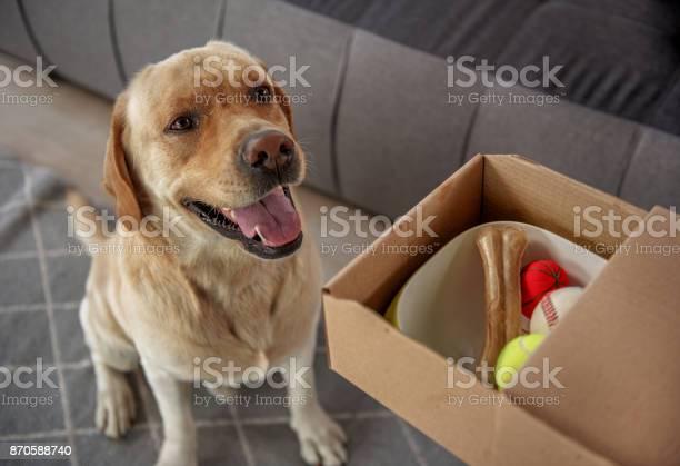 Pleasured dog locating near gift picture id870588740?b=1&k=6&m=870588740&s=612x612&h=d97oo6kd8hjeatvisnnjcavy ufc 5sr98y8gwps5ik=