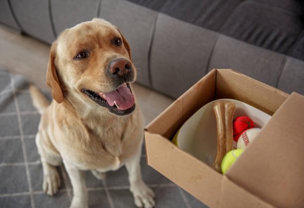 Pleasured dog locating near gift picture id870588740?b=1&k=6&m=870588740&s=612x612&w=0&h=wxla pve6n4fdbrphg3rgnf8h19vvrglr2 prxmvcws=