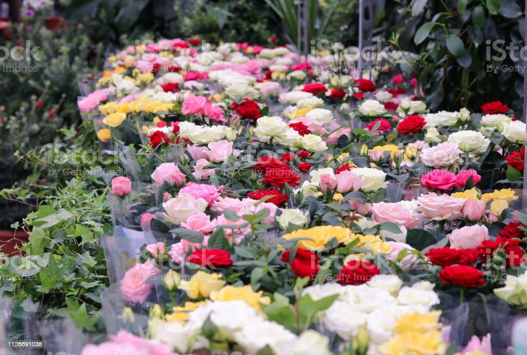 Plenty of different colors rose bouquets and pots in flower shop or...