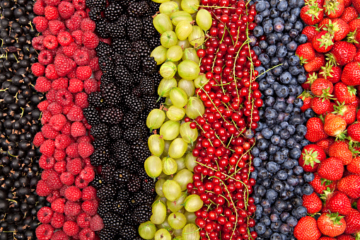 plenty of different fresh berries in a row