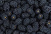 'plenty of fresh blackberries, horizontal'