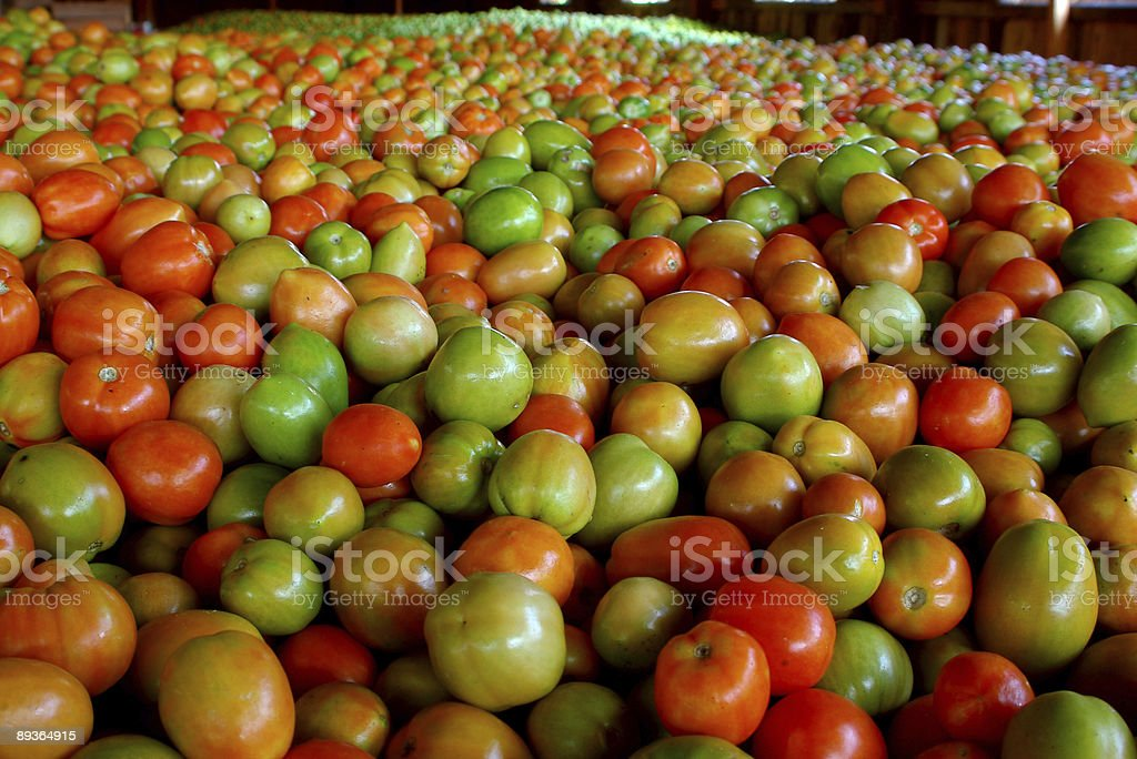 Beaucoup de tomates photo libre de droits