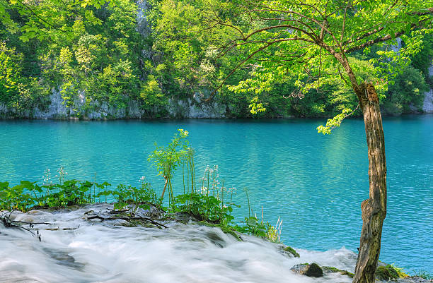 plitvice lakes national park, croatia - plitvice lakes stockfoto's en -beelden