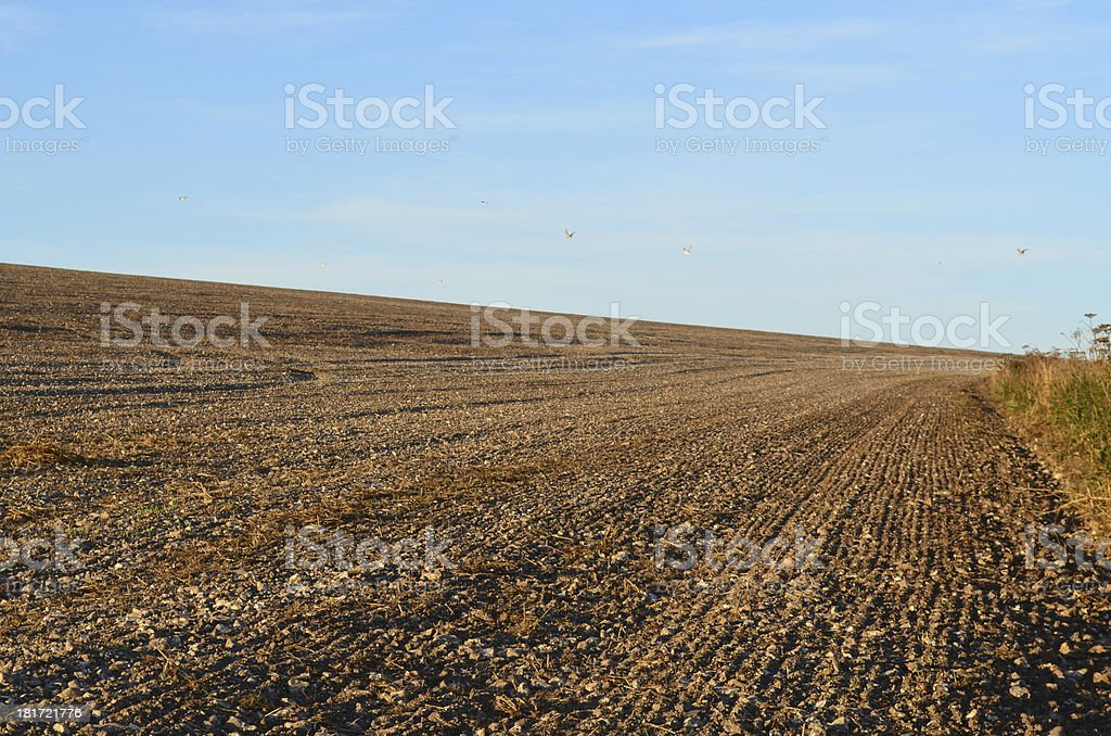 Ploughed crop field royalty-free stock photo