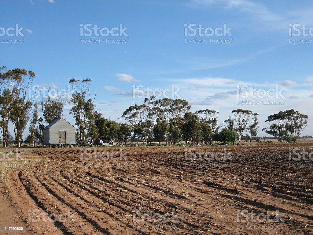 Ploughed crops stock photo