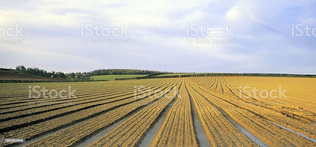 Verbas field - foto de acervo