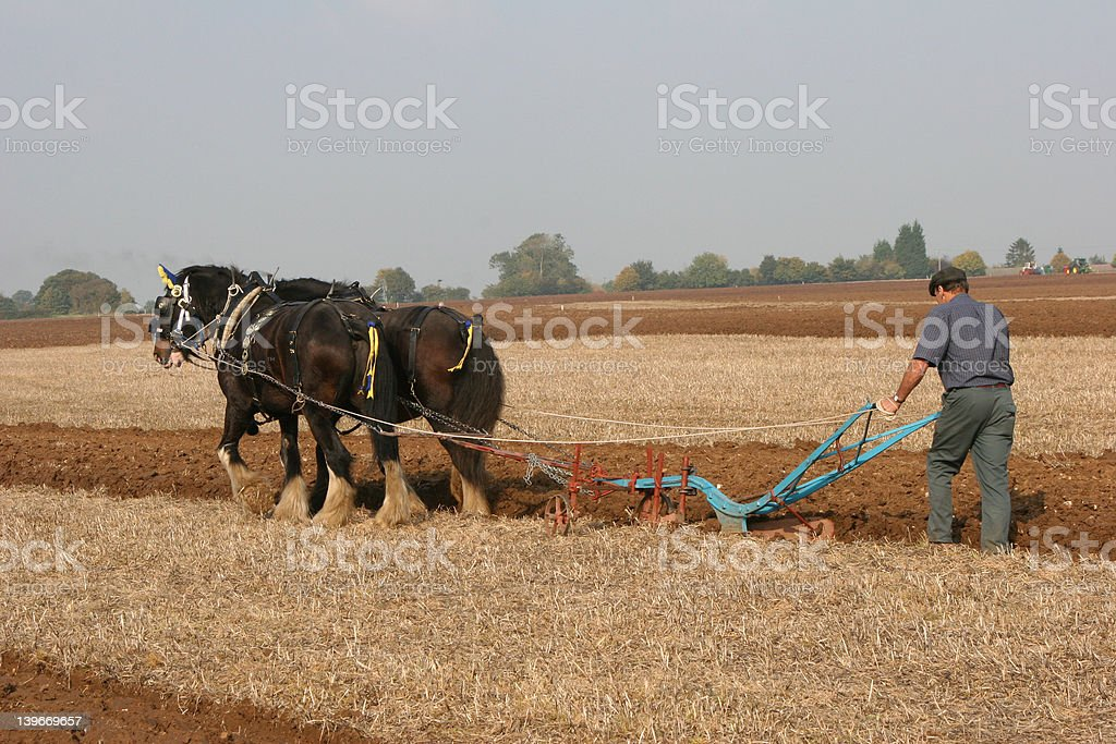Ploughing team stock photo