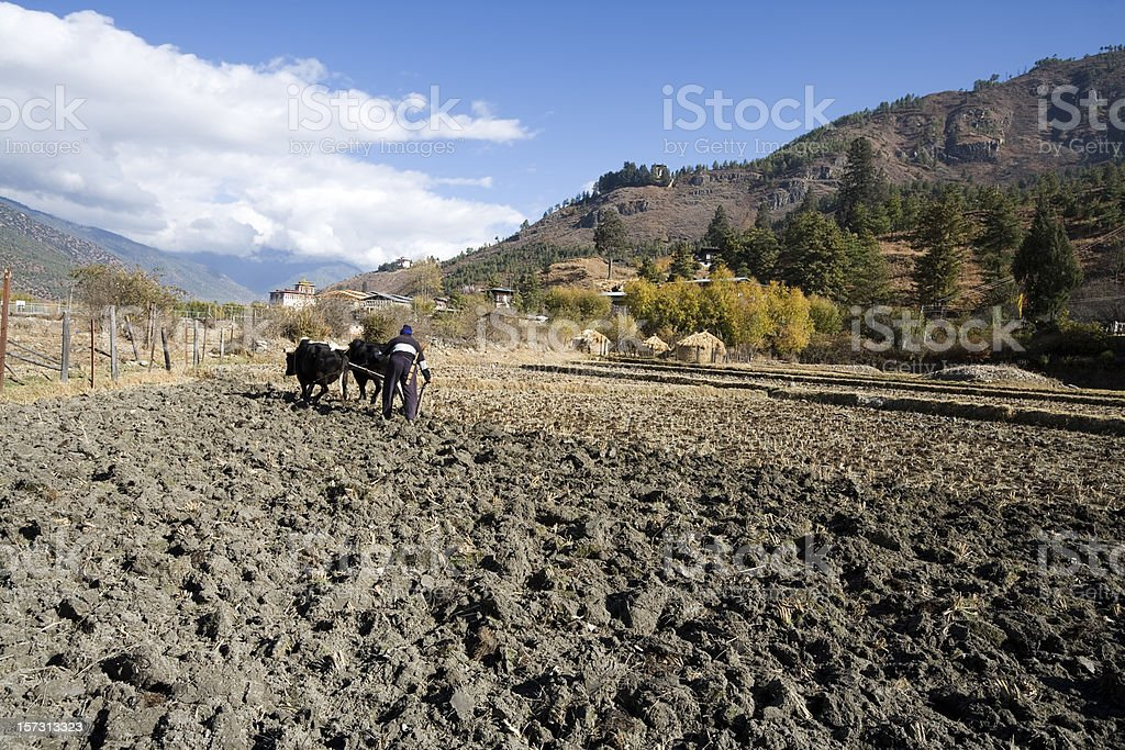 Ploughing the Field in Bhutan royalty-free stock photo