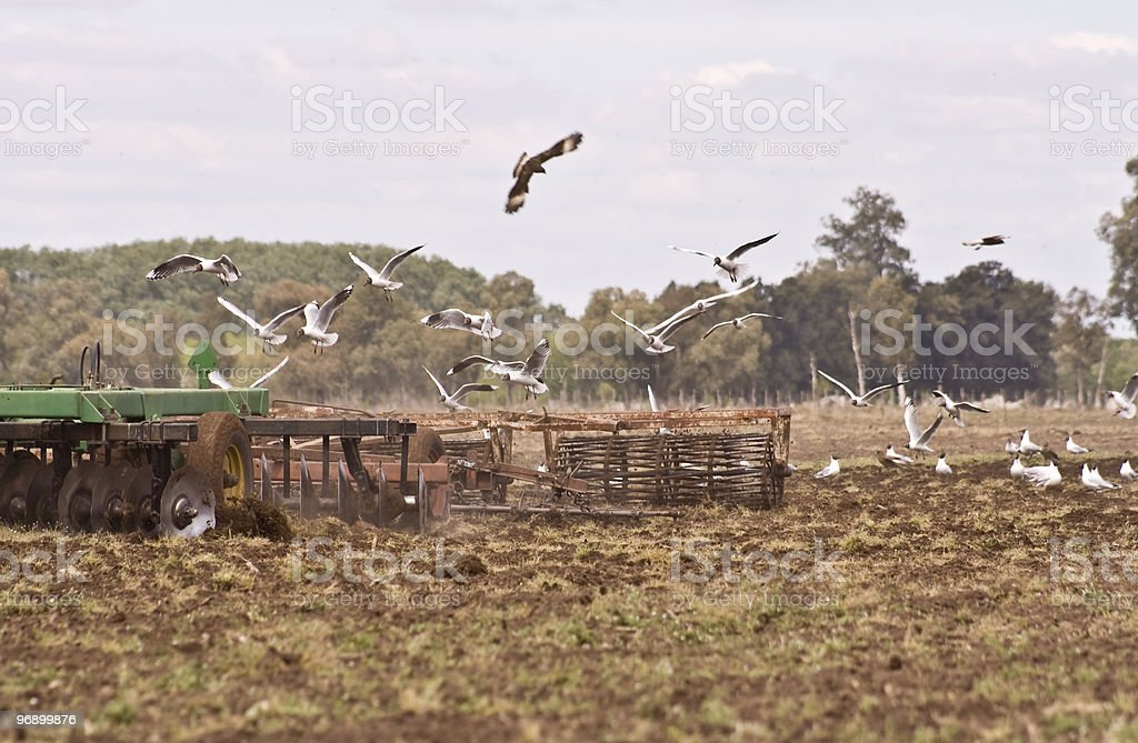 plow at field royalty-free stock photo